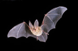 Extreme Heat Wave Leads to Thousands of Bats Dead