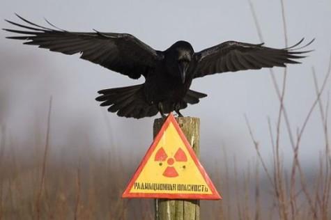 Radioactive Birds?