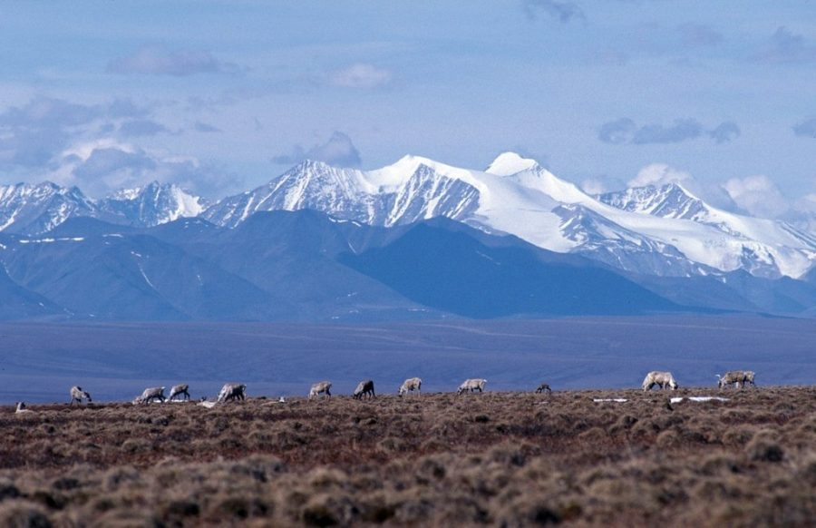 Policy Look Back: Trump Administration Auctions Off Leases For Drilling In Alaska's National Wildlife Refuge